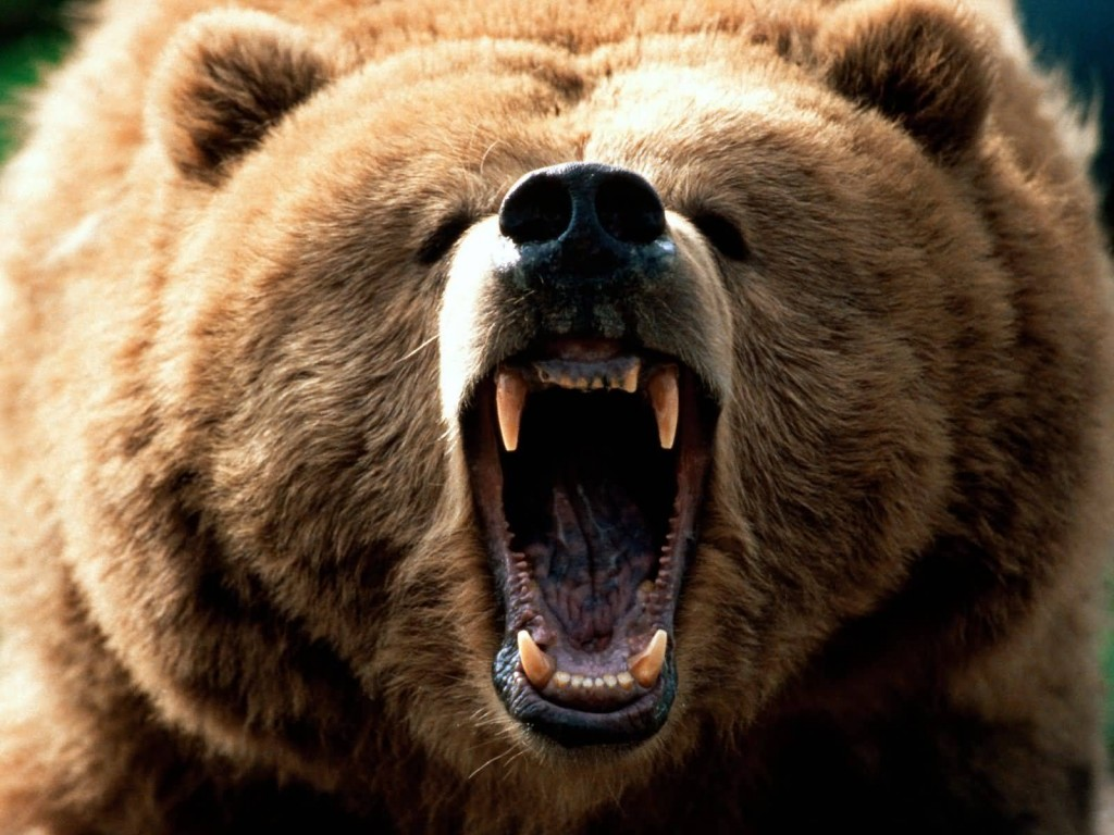 Feeling Grizzly 1600x120011 1024x768 Most Dangerous Animals and How to Prevent, Safeguard and Escape from those Deadliest Animal Attack