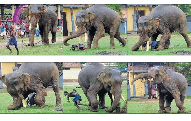 Prevent Safeguard and Escape from Elephant Attack1 Most Dangerous Animals and How to Prevent, Safeguard and Escape from those Deadliest Animal Attack