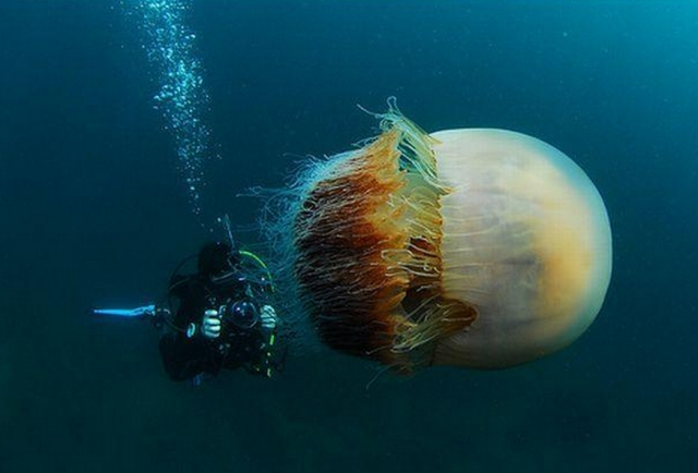 Prevent Safeguard and Escape from Jellyfish Attack1 Most Dangerous Animals and How to Prevent, Safeguard and Escape from those Deadliest Animal Attack