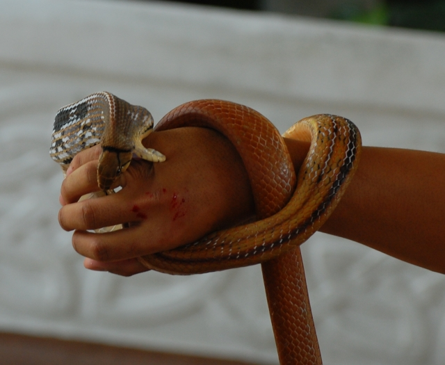 Prevent Safeguard and Escape from Venomous Snake Attack1 Most Dangerous Animals and How to Prevent, Safeguard and Escape from those Deadliest Animal Attack